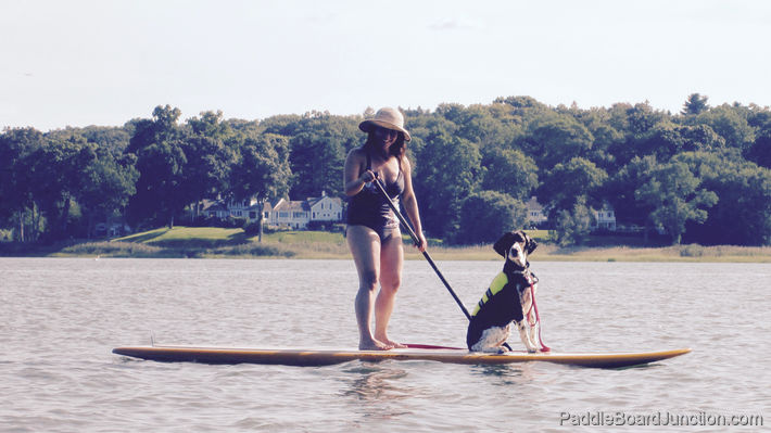 how we take our dog paddle boarding safely